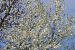 Etot aprel